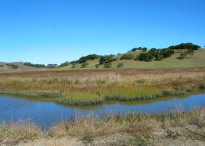 Petaluma Marsh. Photo Judy Stalker