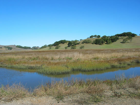 Petaluma Marsh Expansion Project. Photo Jude Stalker