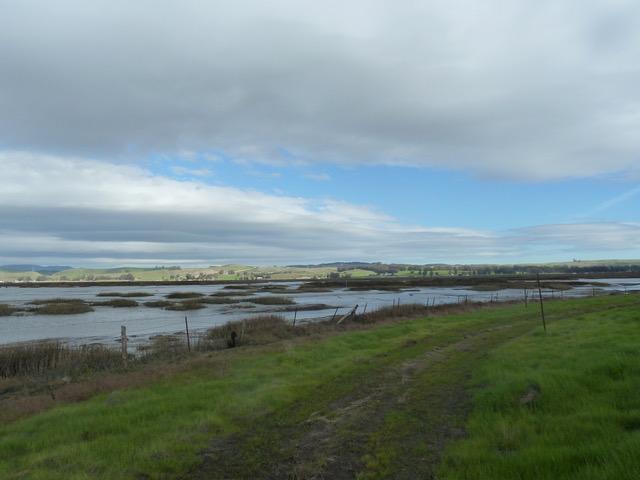 Petaluma Marsh