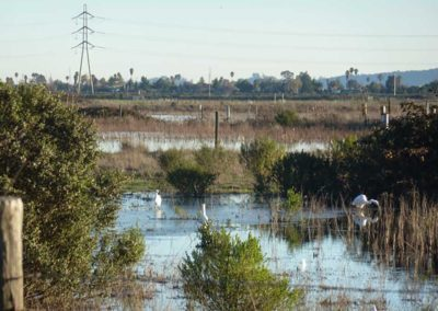 Simmons Slough flooded