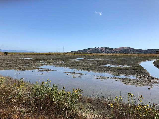 Corte Madera marsh