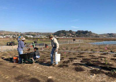 Volunteers planting upland plants at Corte Madera Ecological Reserve Restoration