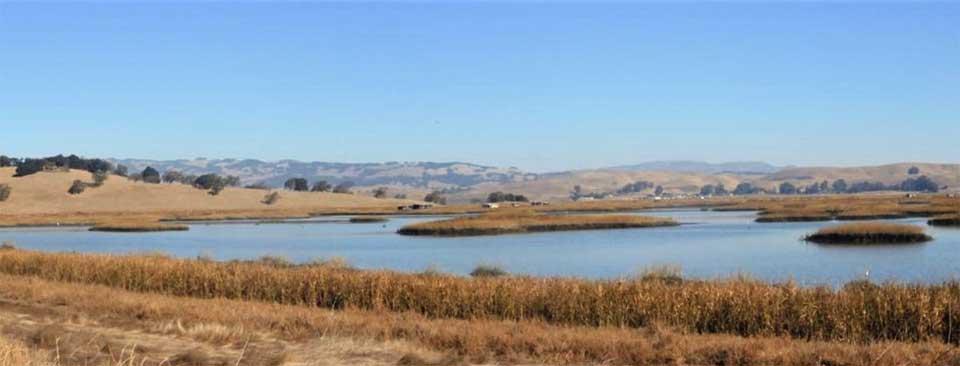 Petaluma Marsh. Photo by Bob Hinz.